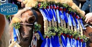 Umritt-Pferde-Dorf