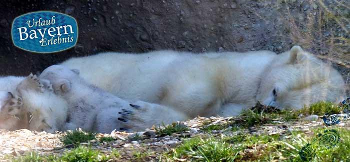 Tierpark München – Ein Ausflug zum Zoo Hellabrunn